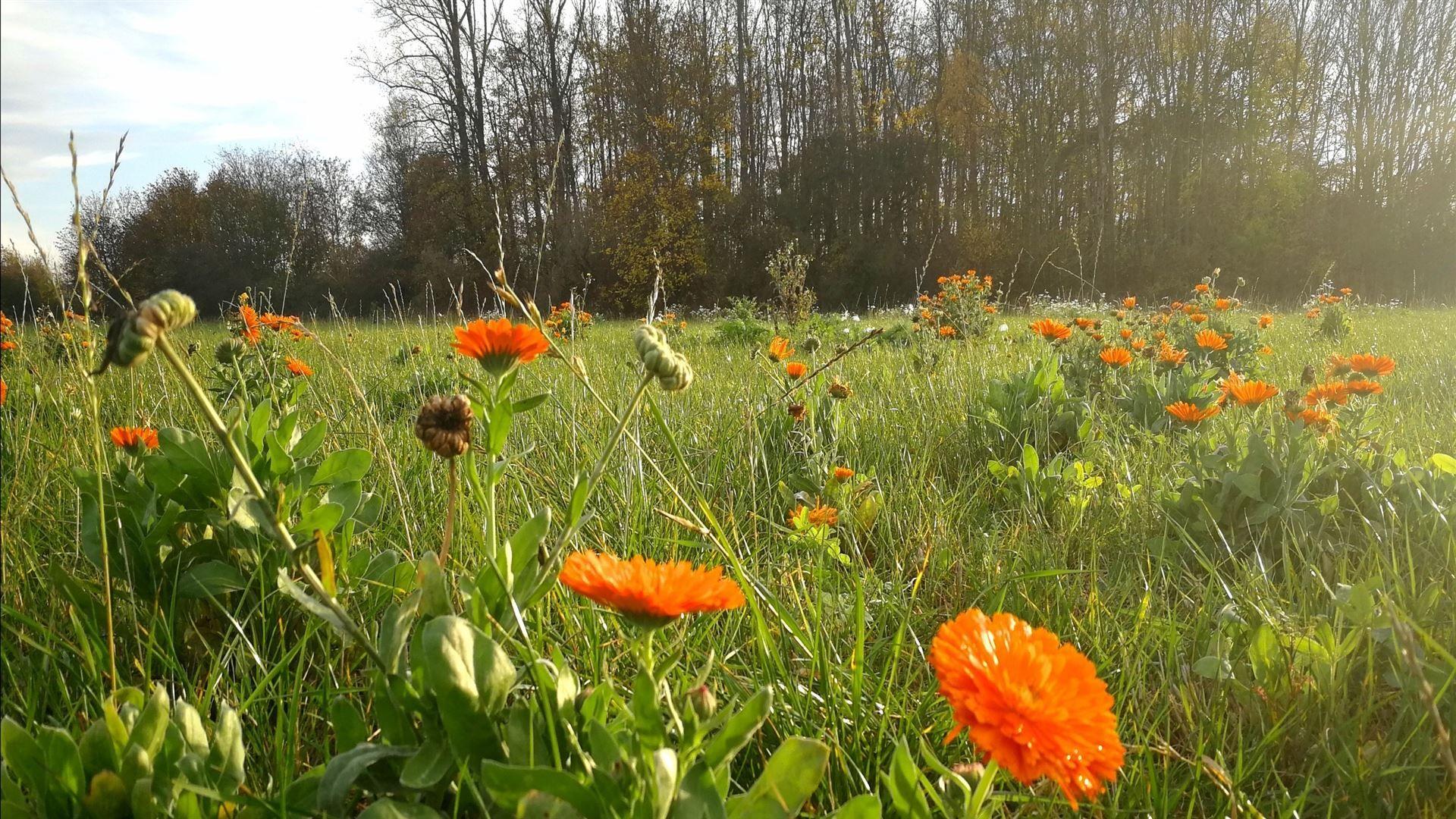 Homepage Startseite: Herbstblumen